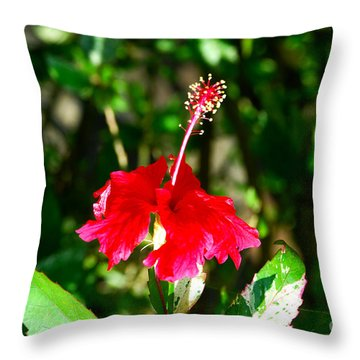Throw Pillow featuring the photograph Hibiscus by Pravine Chester