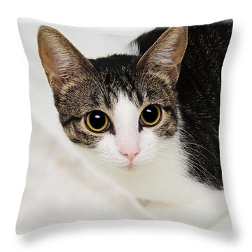 Hiding In The Bath Tub Throw Pillow by Andee Design