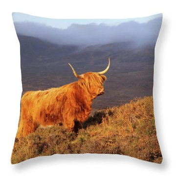 Highland Cattle Landscape Throw Pillow