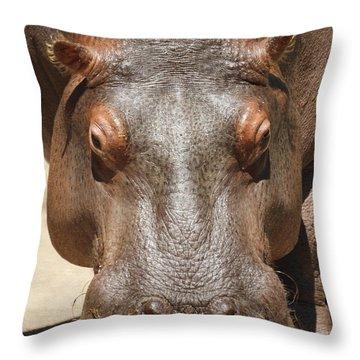 Hippopotamus Throw Pillow by Ernie Echols