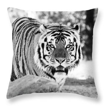 His Majesty Throw Pillow by Scott Pellegrin