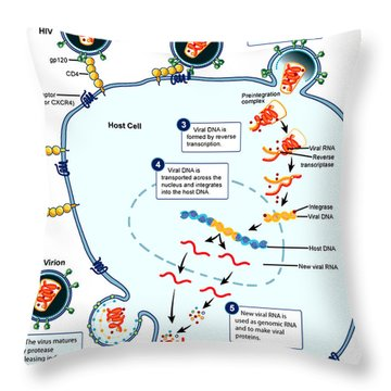 Hiv Virus Replication Cycle Throw Pillow by Science Source