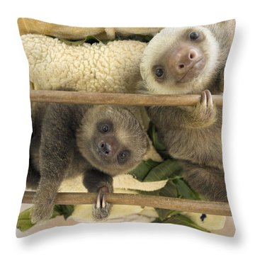 Hoffmanns Two-toed Sloth Orphaned Babies Throw Pillow by Suzi Eszterhas