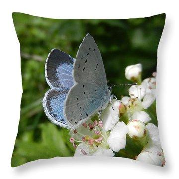 Holly Blue Throw Pillow