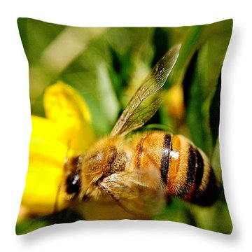 Honey Bee Throw Pillow by Chriss Pagani