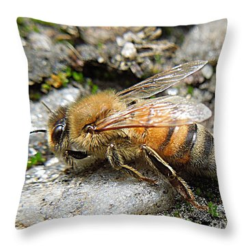 Throw Pillow featuring the photograph Honey Bee On Rocks by Renee Trenholm