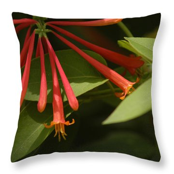 Throw Pillow featuring the photograph Honeysuckle by Wanda Brandon