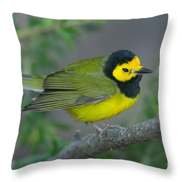 Hooded Warbler Throw Pillow by Clarence Holmes