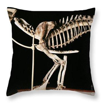 Hoplophoneus Primaevus Throw Pillow by Science Source