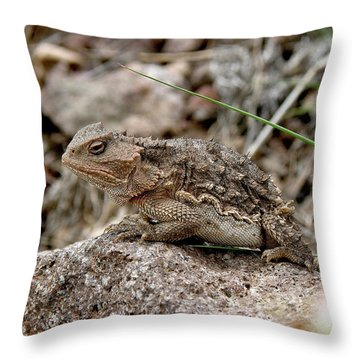 Horned Toad Throw Pillow by FeVa  Fotos