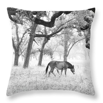 Horse In Foggy Field Of Oaks Throw Pillow by CML Brown
