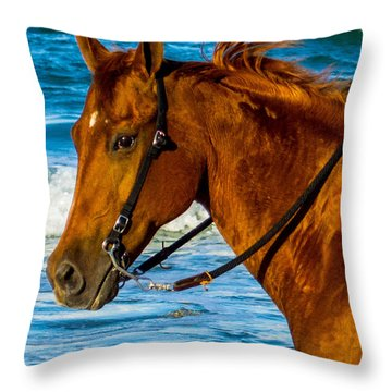 Horse Portrait  Throw Pillow by Shannon Harrington