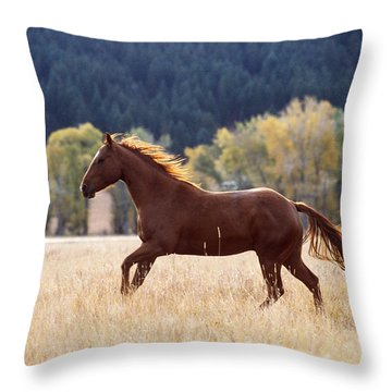 Horse Running Throw Pillow by Alan and Sandy Carey and Photo Researchers