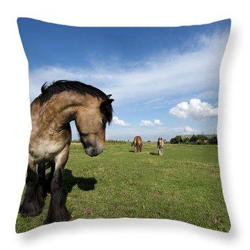 Horsepower Throw Pillow by Robert Lacy