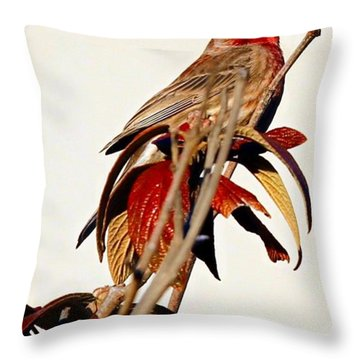 Throw Pillow featuring the photograph House Finch Perch by Elizabeth Winter
