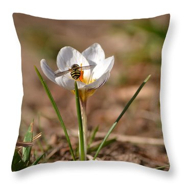 Hoverfly Visitng A Crocus Throw Pillow
