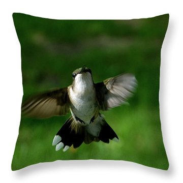 Hovering Hummingbird  Throw Pillow by Sue Stefanowicz