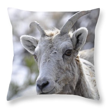 How Close Is Too Close Throw Pillow by Dorrene BrownButterfield
