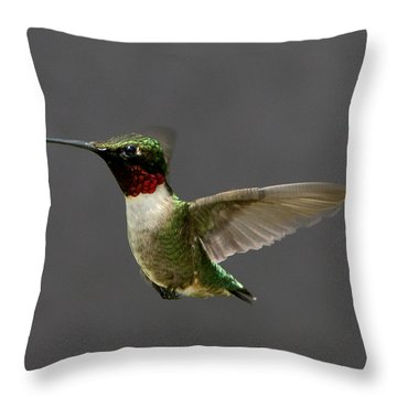 Throw Pillow featuring the photograph Hummingbird 1 by John Crothers
