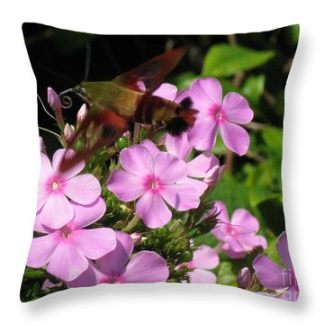 Throw Pillow featuring the photograph Hummingbird Moth  by Nancy Patterson
