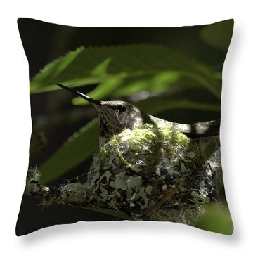 Throw Pillow featuring the photograph Hummingbird On Nest by Betty Depee