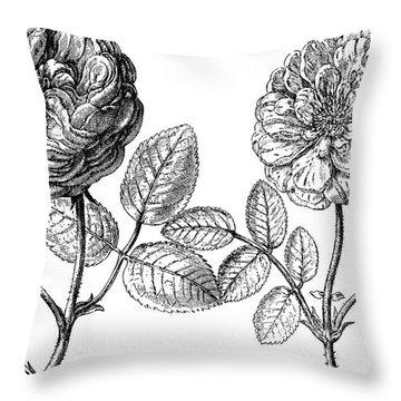 Hundred-leafed Rose Throw Pillow by Granger