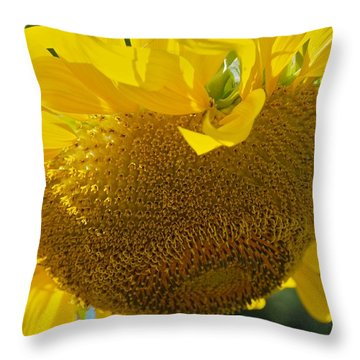 Throw Pillow featuring the photograph Hungover by Joseph Yarbrough
