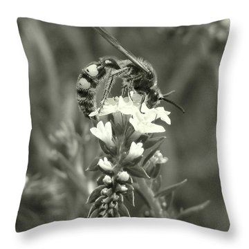 Hunter Wasp On Heliotrope Throw Pillow