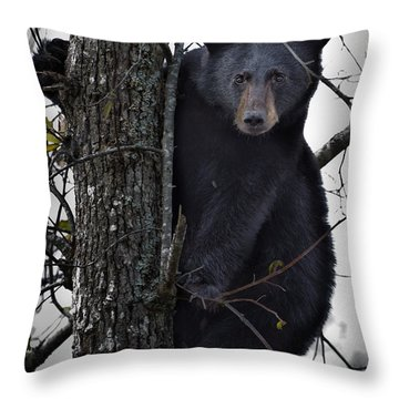 Hunting Berries Throw Pillow by Ronald Lutz