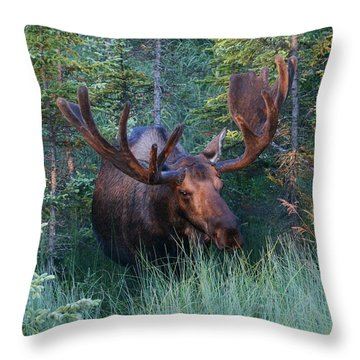 Throw Pillow featuring the photograph Hunting Some Munchies by Doug Lloyd