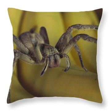 Hunting Spider Cupiennius Salei Walking Throw Pillow by Heidi & Hans-Juergen Koch