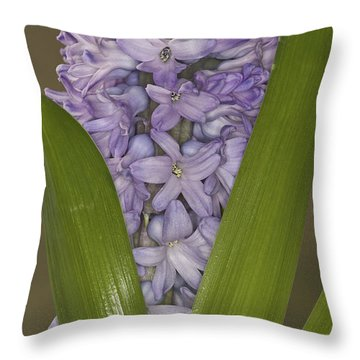 Hyacinth In Full Bloom Throw Pillow