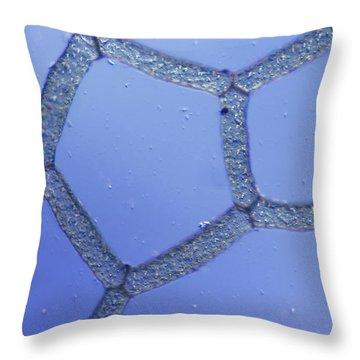 Hydrodictyon Sp. Algae, Lm Throw Pillow by M. I. Walker