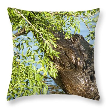 I Can See You Throw Pillow by Carolyn Marshall
