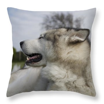 I Know Your There Throw Pillow