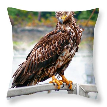 I Like What I See Throw Pillow