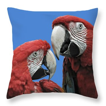Throw Pillow featuring the photograph I Told You So by Rodney Campbell