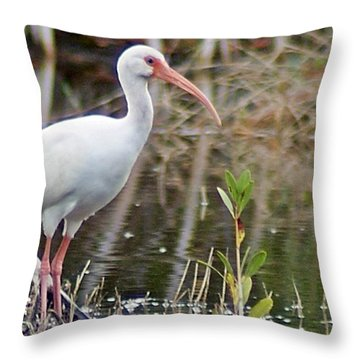 Ibis 1 Throw Pillow by Joe Faherty