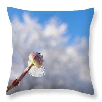 Iced Dogwood Throw Pillow