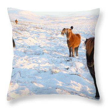 Iceland Throw Pillow