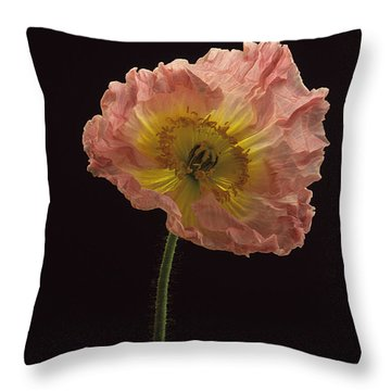 Iceland Poppy 3 Throw Pillow