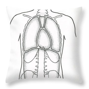 Illustration Of Anterior Body Cavities Throw Pillow