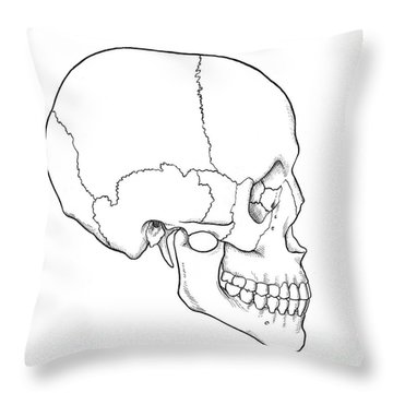 Illustration Of Human Skull Throw Pillow by Science Source