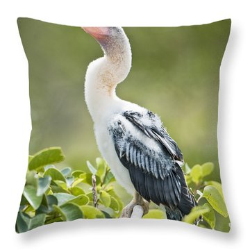 Immature Anhinga Throw Pillow by Patrick M Lynch