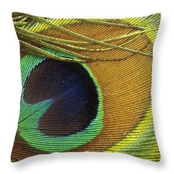 Indian Peafowl Pavo Cristatus Male Throw Pillow by Gerry Ellis