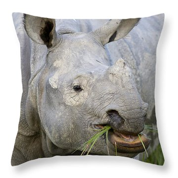 Indian Rhinoceros Grazing Kaziranga Throw Pillow by Suzi Eszterhas