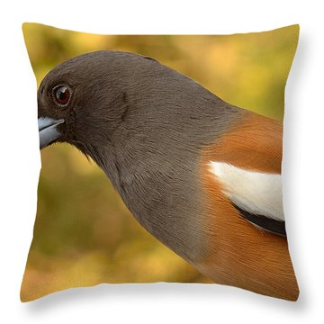 Indian Treepie. A Portrait. Throw Pillow by Fotosas Photography