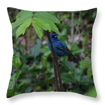 Indigo Bunting Surprise Throw Pillow