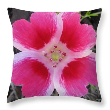 Ingenious Photography Throw Pillow by Tina Marie