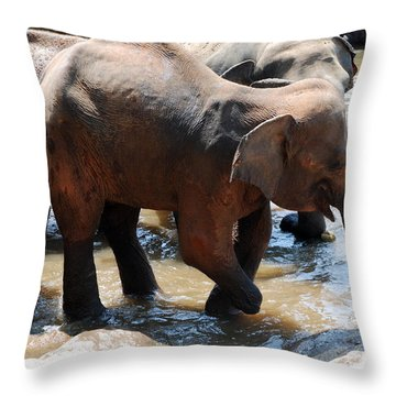 Throw Pillow featuring the photograph Injured Elephant  by Pravine Chester